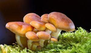Substitute for mushrooms
